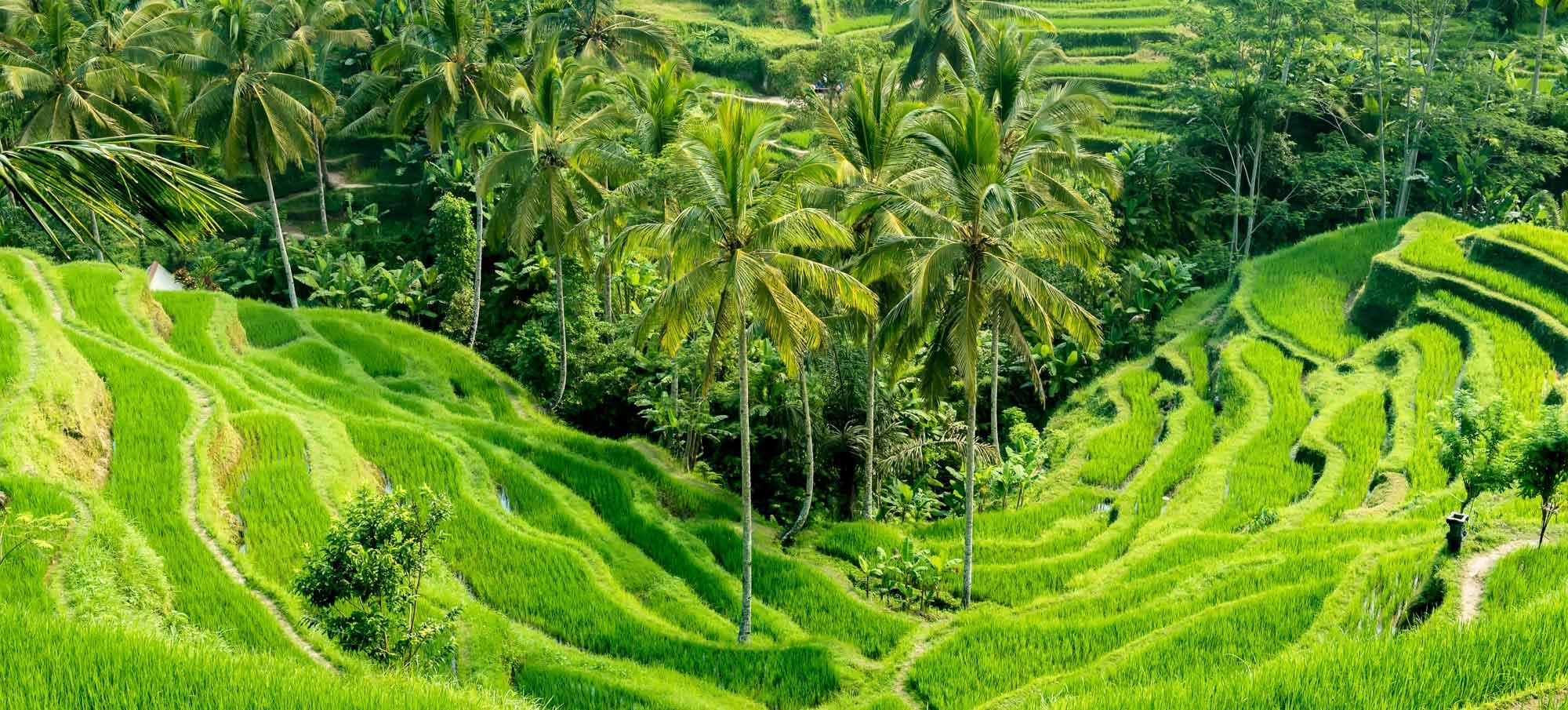 indonesie-voyage
